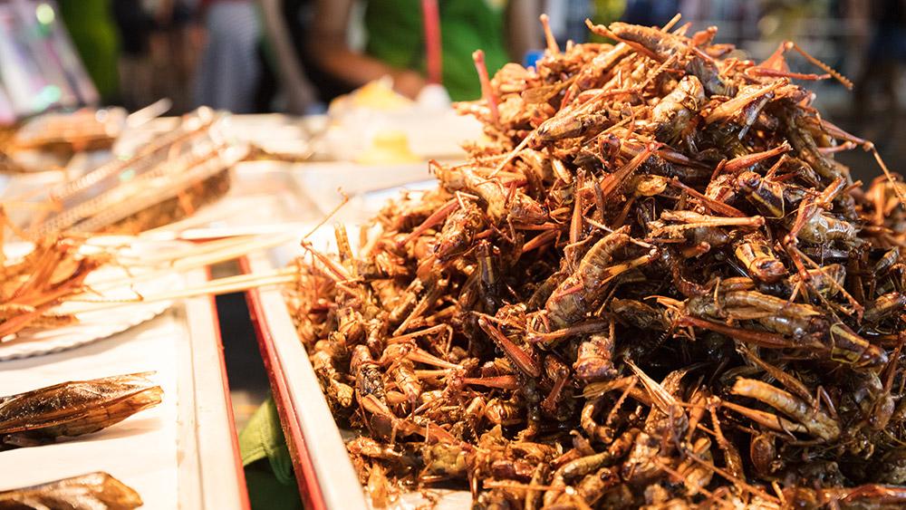 bangkok-street-food-insects